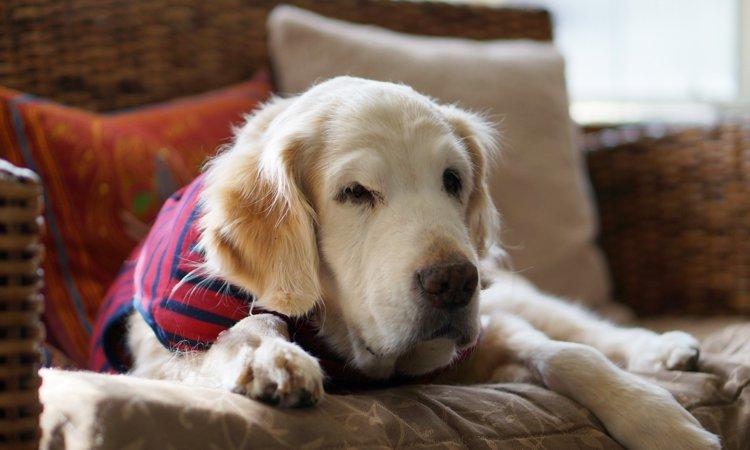 実は逆効果!?犬の老化を早めてしまう5つの勘違い行動