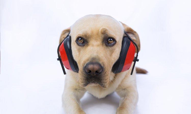 犬が音に敏感に反応して吠える!音恐怖症を克服する方法