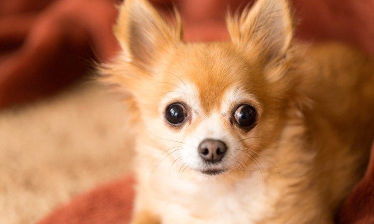 犬の目の周りが汚れている時にやりたいお手入れ方法