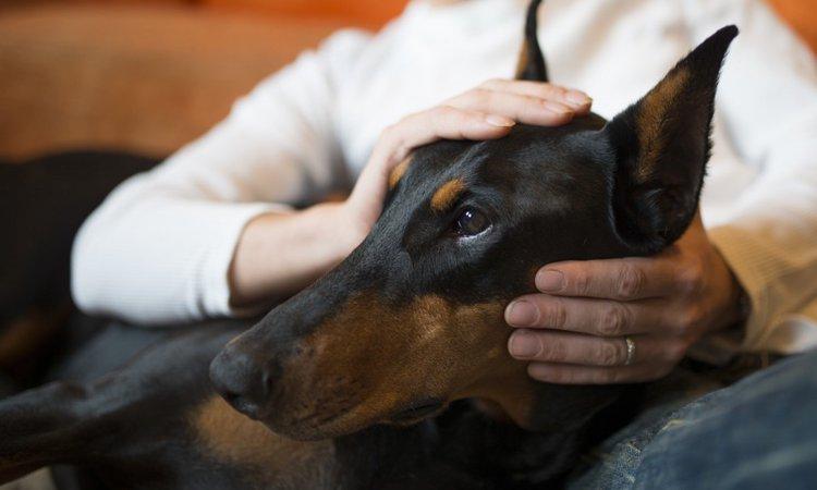 大型犬をマンションで飼うためのポイントと注意点