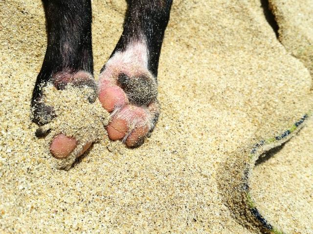 犬のアレルギー性皮膚炎について 症状と原因から治療や予防法まで