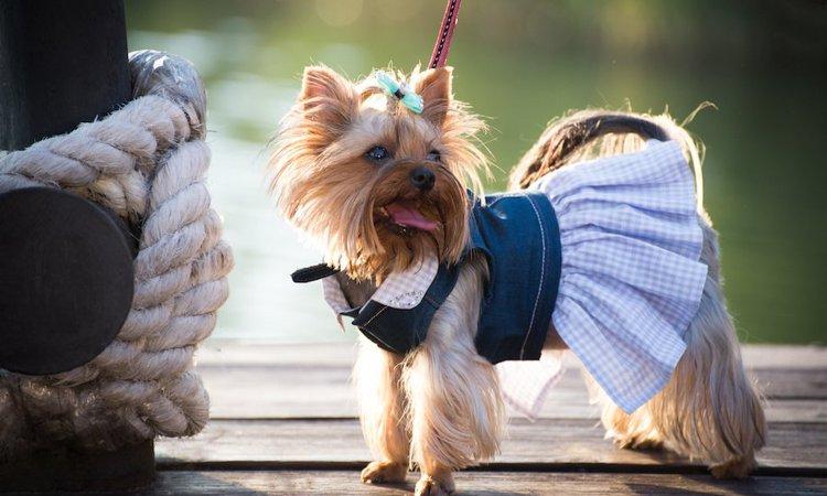 なぜ犬はオスよりもメスの方が値段が高いのか?