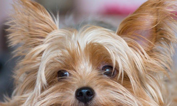 犬がいじける7つの理由