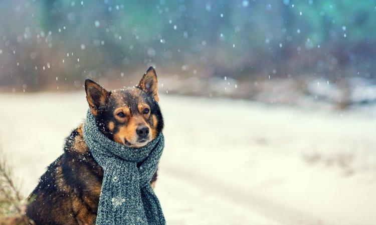 冬の寒い時期に高齢犬を散歩させるときに気をつけるべきこと