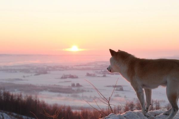 最後の愛情表現。死の直前に姿を隠そうとした愛犬の優しさ