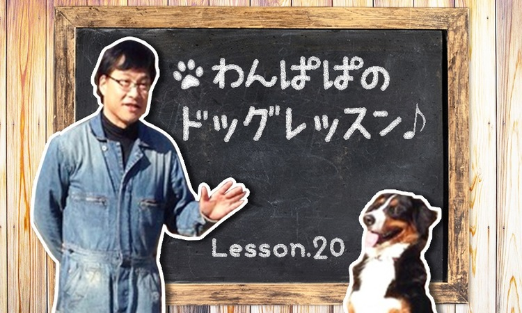 わんばぱのドッグレッスン♪Lesson20〜犬が年齢詐称?の巻〜