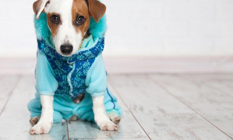 【良かれと思っていたのに…】やってしまいがちな間違った犬の寒さ対策