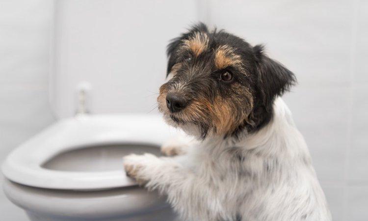 犬用トイレトレー人気ランキングBEST5♪
