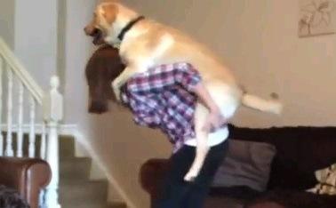 「ママ運んで~」飼い主さんに寝室へ連れて行ってもらうワンちゃん