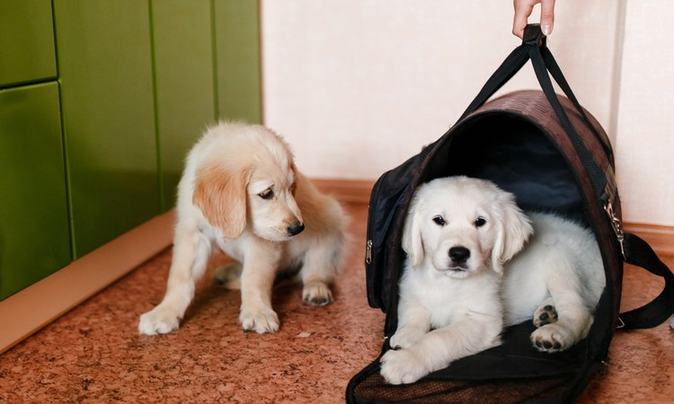 災害時にあると助かる!犬の防災グッズおすすめ6選