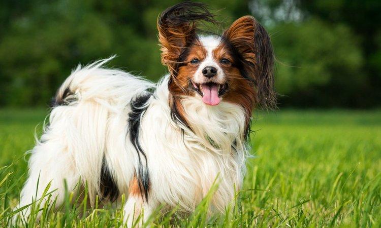 長生きな犬種5選!傾向と長寿の秘訣