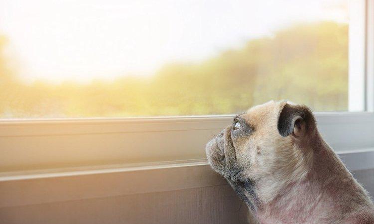 犬の陥る分離不安とその対策について