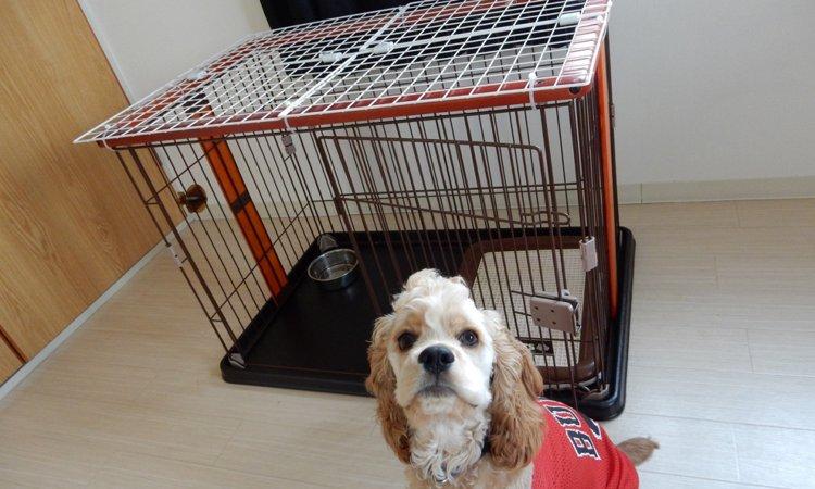 愛犬が留守番中にケージを脱走してしまうときの危険性と対処法