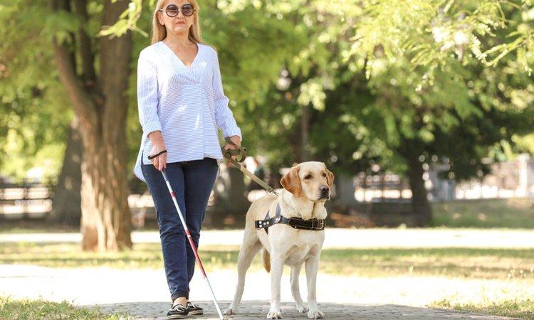 補助犬(盲導犬・介助犬・聴導犬)の一生。出生から引退まで