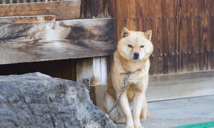 犬を外で飼うと寿命が縮まる?