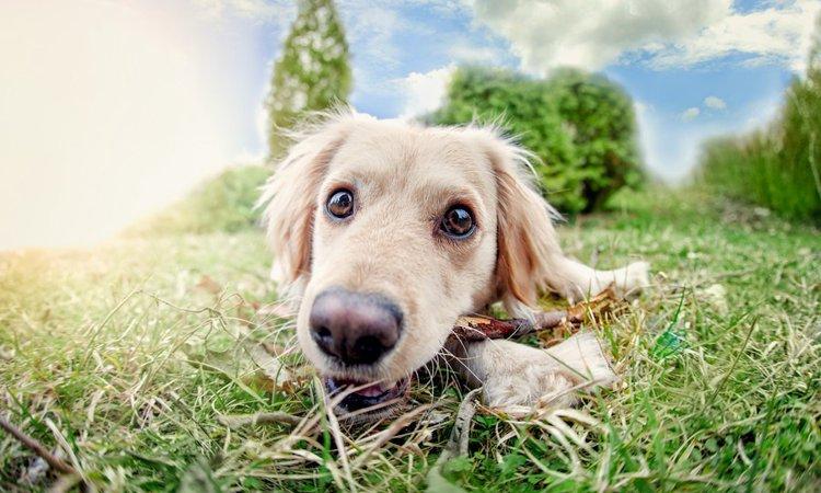 犬の平均寿命ってどのくらい?犬種別にみる年齢