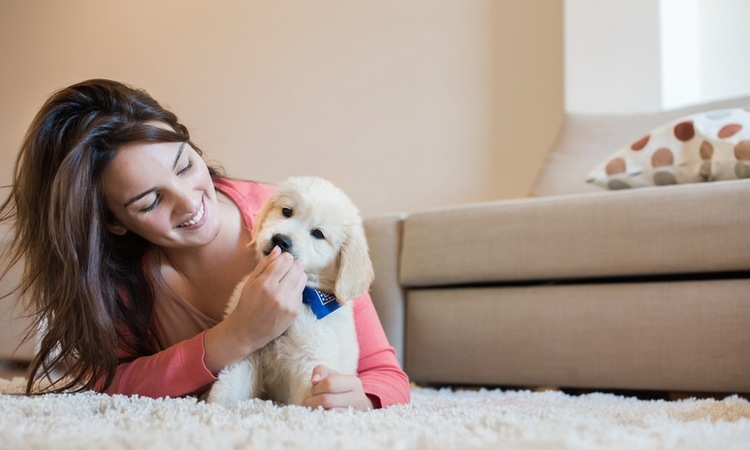 飼い主が愛犬を子供扱いしてしまう3つのワケ