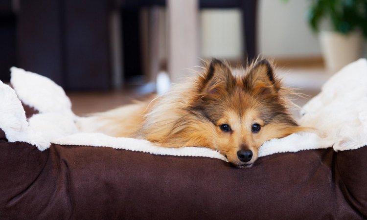 犬の保護ボランティアにはどんな活動がある?
