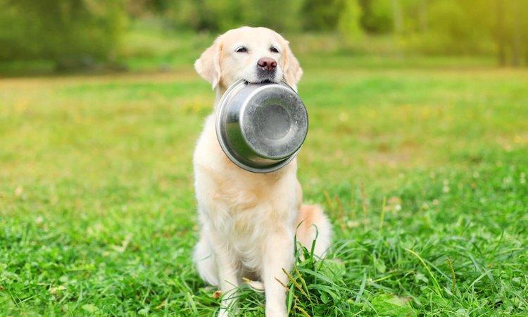 愛犬の体質にドッグフードが合っていない時に出る症状5つ
