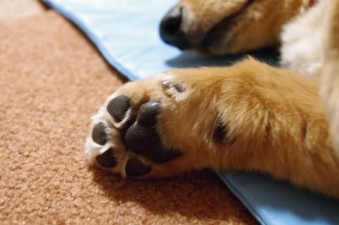 犬の爪切りを嫌がるワンコと黒いツメの対処法