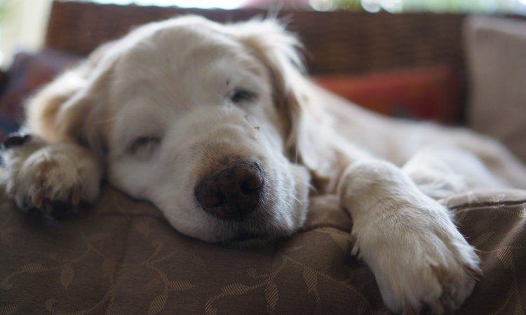 犬の寝床を設置する最適な場所とは?