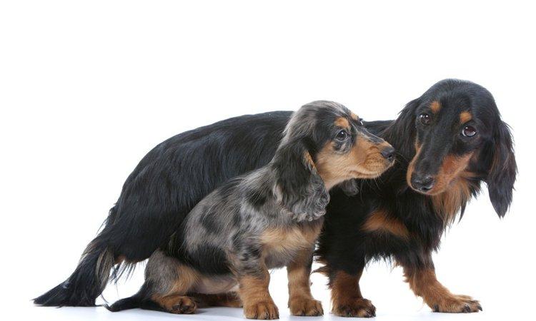 犬の性格って遺伝するの?性格行動特性の遺伝学