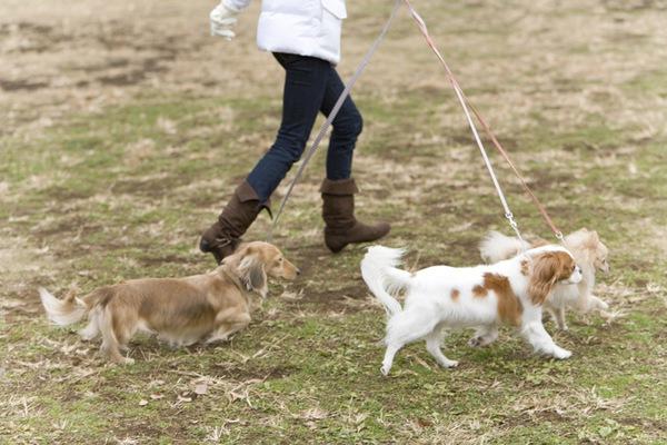 犬にとっての散歩とは?運動になるだけじゃない2つの重要な効果