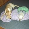若犬との同居で活力が蘇った老犬