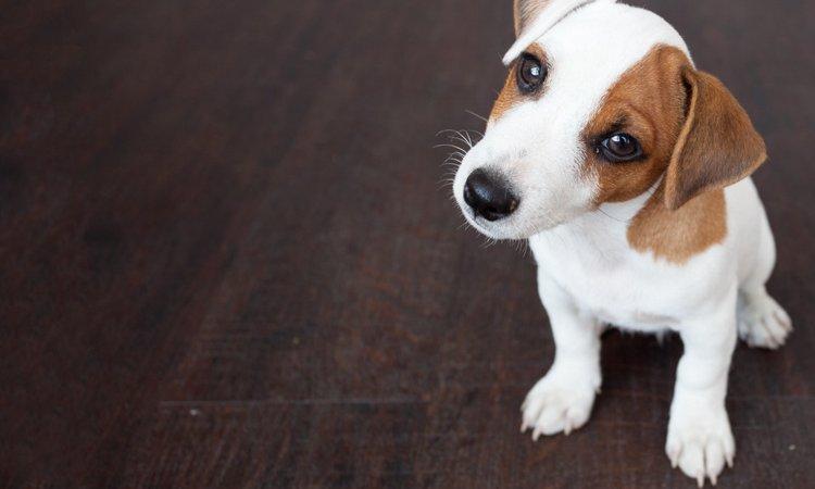 今まで出来ていたことが突然出来なくなった時、愛犬が「嫌なイメージ」を抱いていないか考えよう