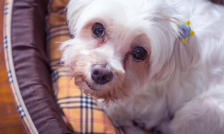 犬が怯えているときに見せる5つの仕草