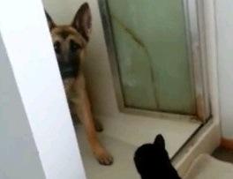 出れない…ニャンコが恐くてシャワー室から出れないワンちゃん