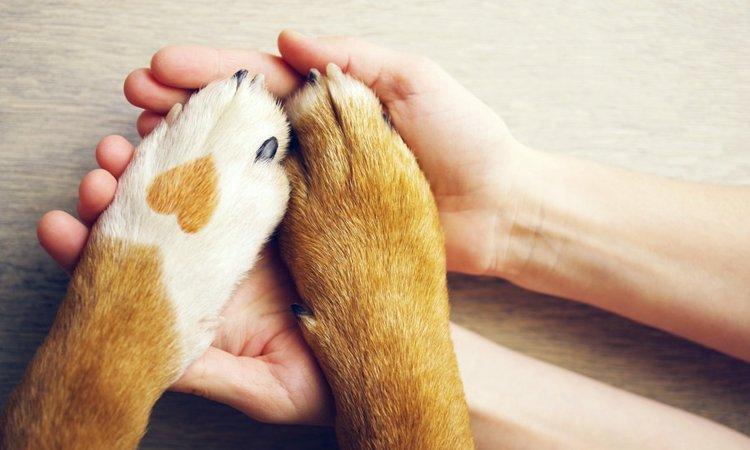 愛犬と飼い主、お互いが幸せになれる3つの生活習慣