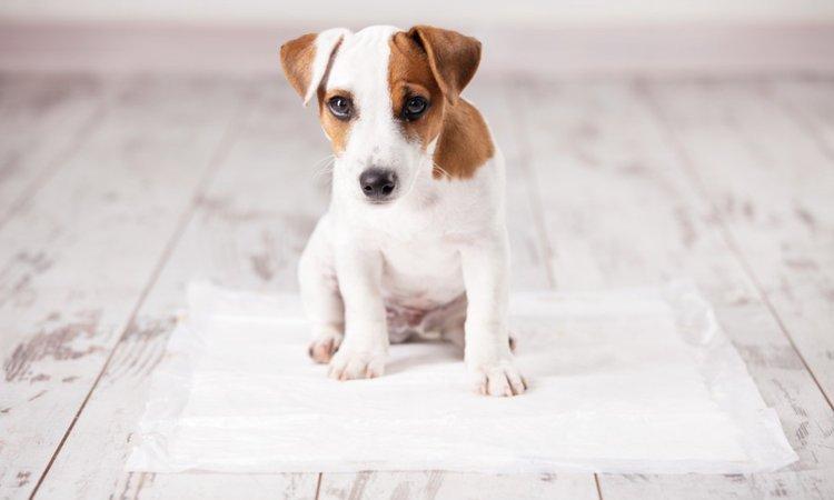 犬がトイレを我慢している時に見せる4つの仕草