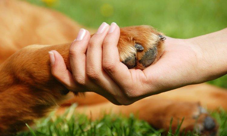 犬が足を拭かせてくれない時の対処法4つ
