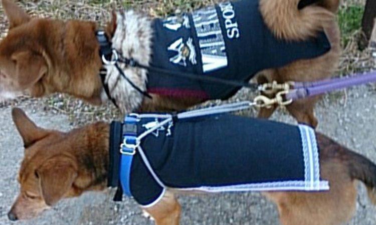 衣替えの季節こそオススメ!リメイクで愛犬の服を作ってみましょう!