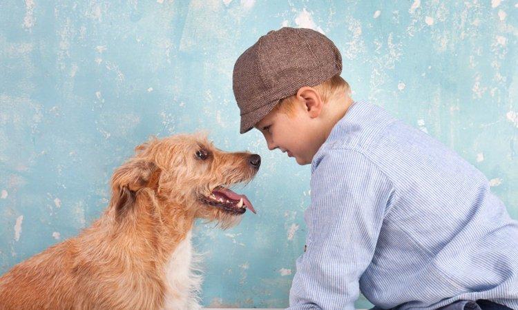 犬には『同情』という感情がある?