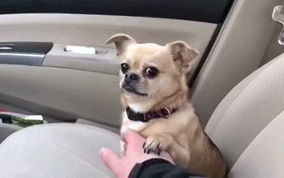 触っていて!病院へ行かせないように注意をひく犬