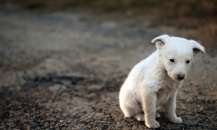 飼い主が変わった時の犬の心理を考える