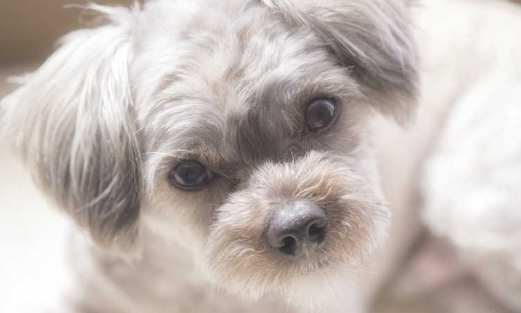 犬を飼う前に考えて欲しい4つのこと