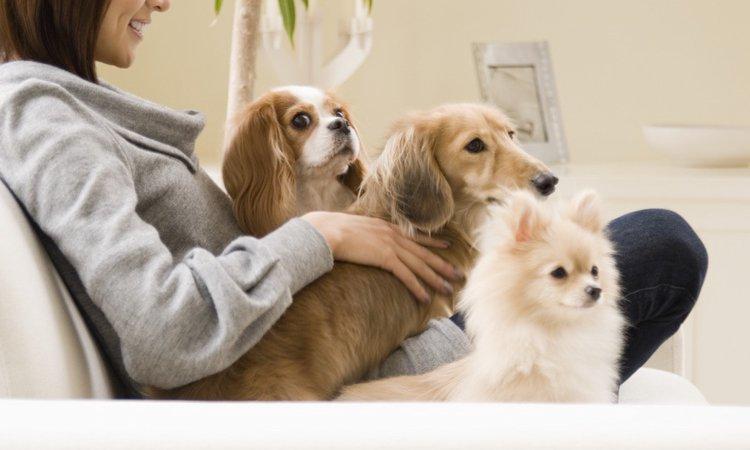 人気の室内犬10選!主な性格や飼い方まで