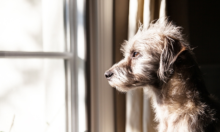 犬にインセクトシールドを着せるだけで虫よけ効果あり!