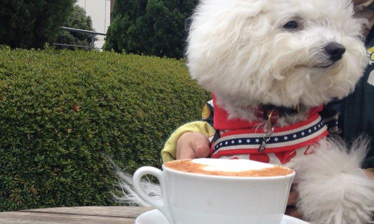 犬にコーヒーを飲ませてはダメ!カフェイン中毒に要注意!