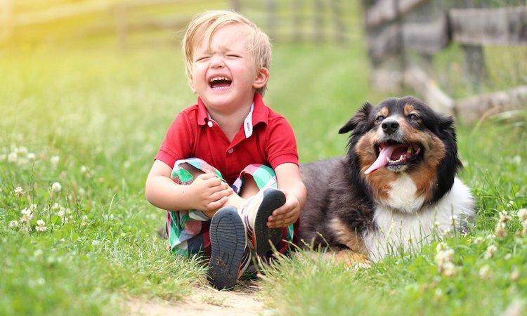 犬は飼い主の体調不良が分かる?