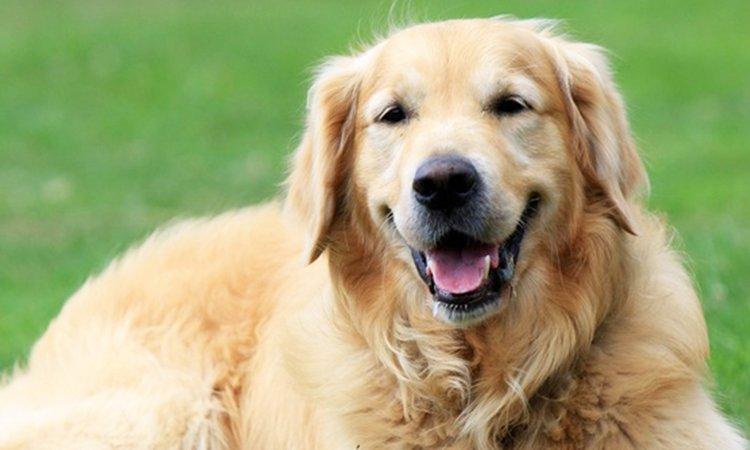 大型犬に多い「肘タコ」の原因と予防法とは?