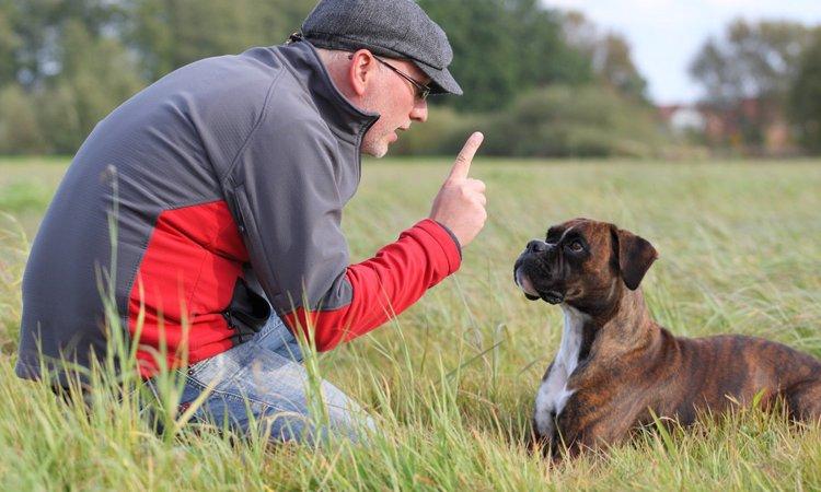 犬の知識がない飼い主がやりがちなNG行為4選