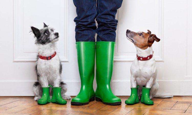 雨の日にやりたい!犬の運動不足を室内で解消する3つの方法