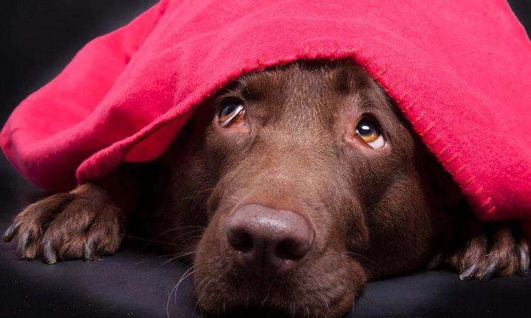 犬が悲しい鳴き声を出している時の5つの心理