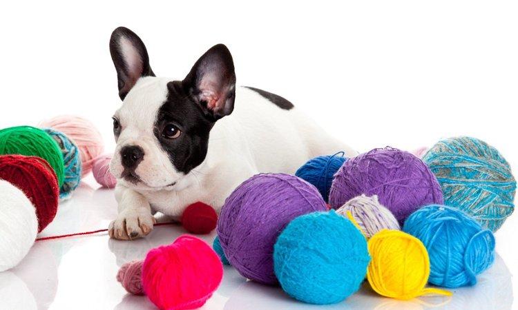 犬が好きな色って?落ち着く色や見えづらい色まで