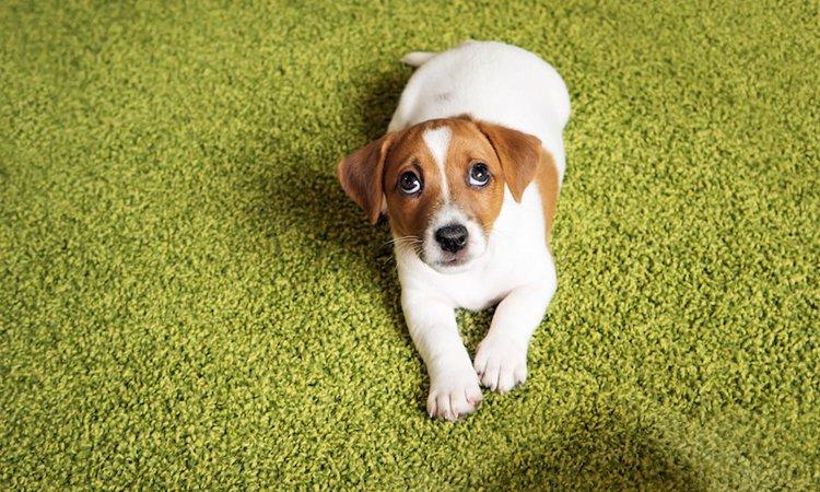 犬が叱られてる!と感じる飼い主の行動5つ