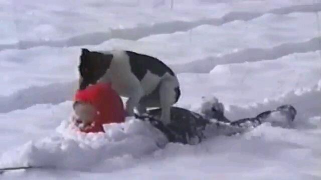 犬は喜び庭駆けまわる!?雪に大はしゃぎなワンコ達!(動画)